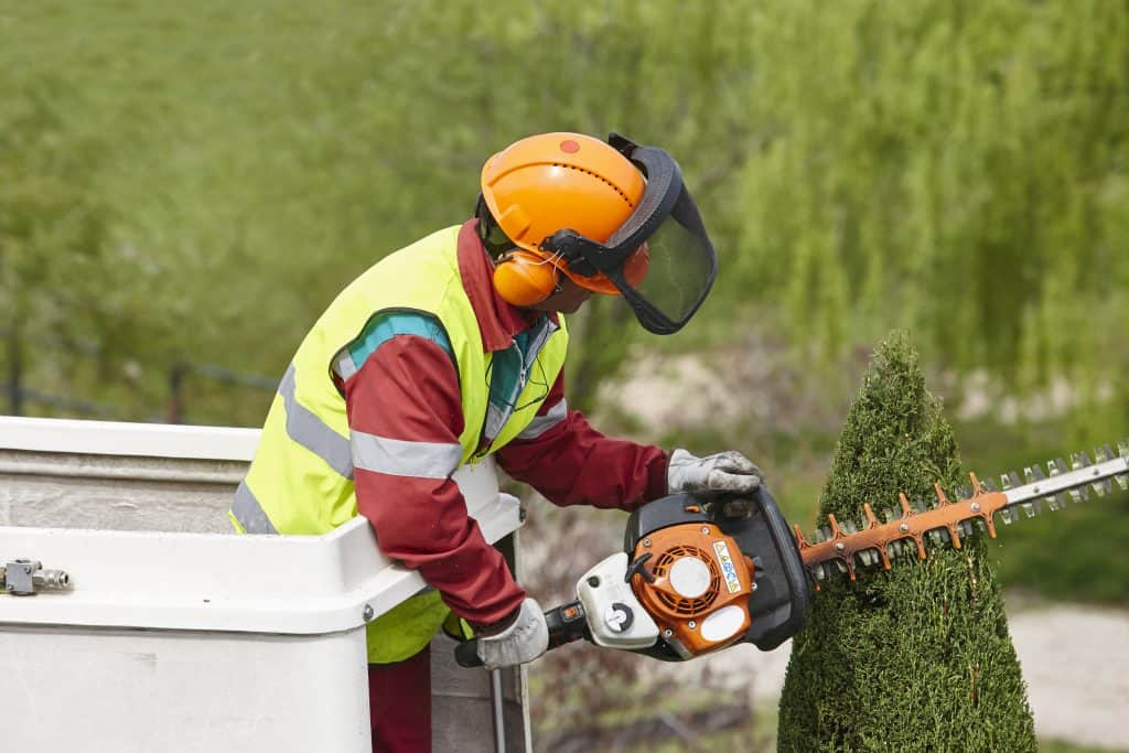 albuquerque tree removal services