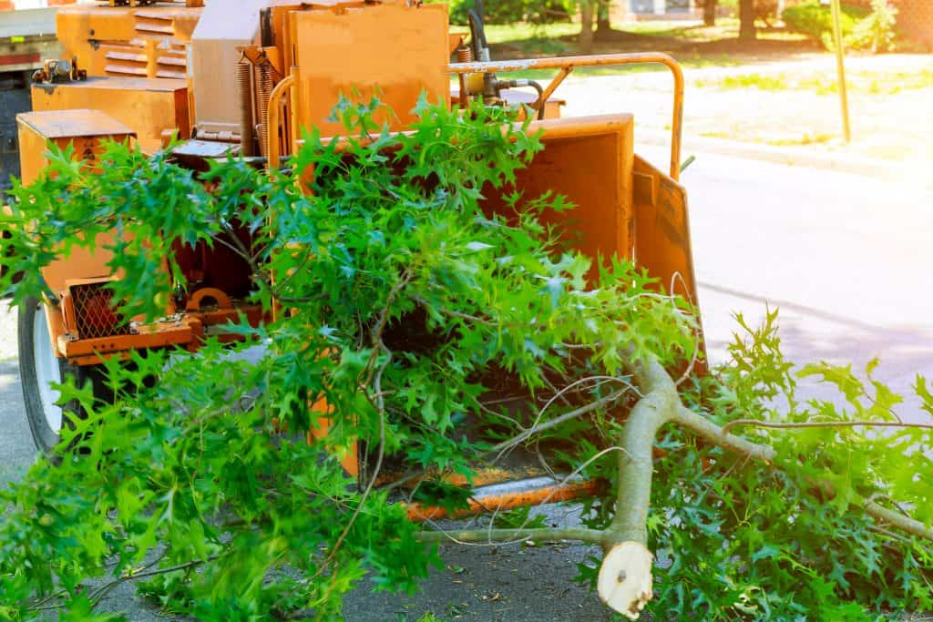 albuquerque tree removal