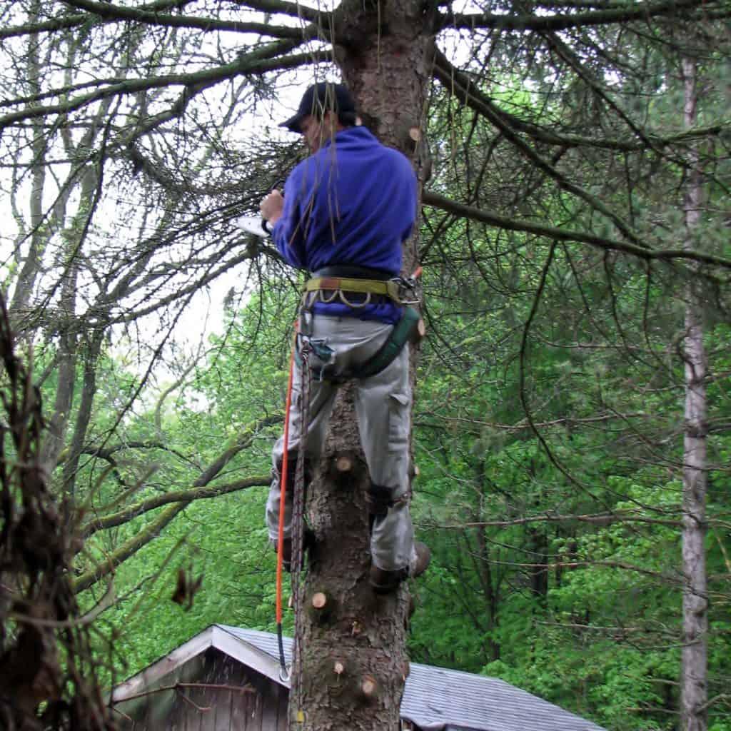 albuquerque arborist