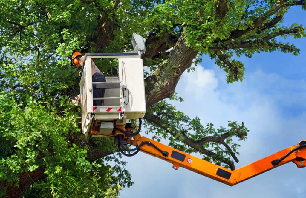 albuquerque tree removal service