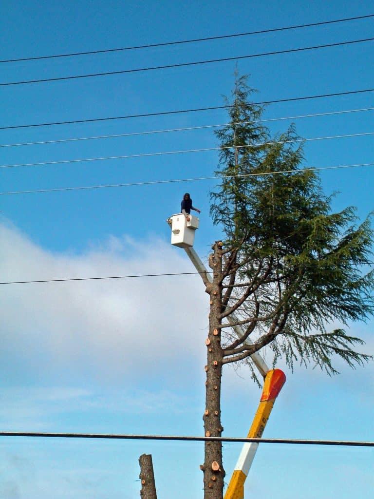 arborist albuquerque nm