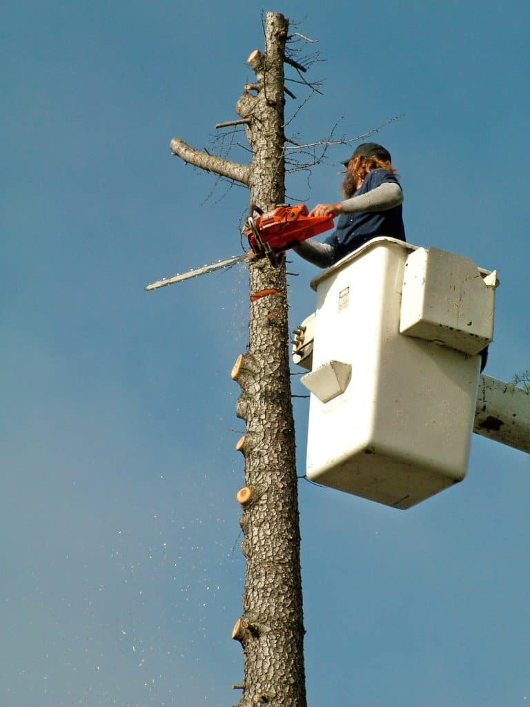 albuquerque nm tree services